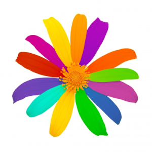 multicoloured flower